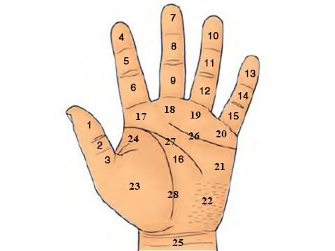 Vị trí nốt ruồi trên bàn tay