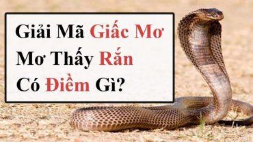Mơ thấy rắn là điềm báo gì, con số liên quan tới mơ thấy rắn