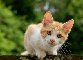 Mơ thấy mèo đánh con gì, nằm mơ thấy mèo là điềm báo gì