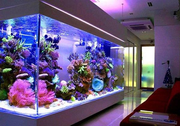 Phong thủy bể cá cảnh hợp Mệnh gia chủ
