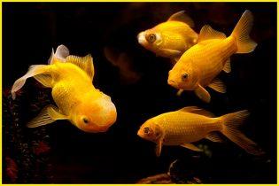 Mơ thấy cá là điềm báo gì