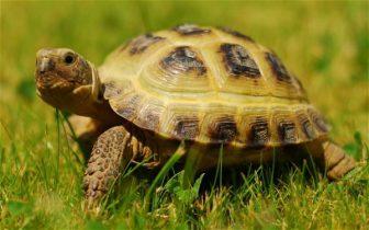 Mơ thấy rùa là điềm báo gì, con số liên quan mơ thấy rùa