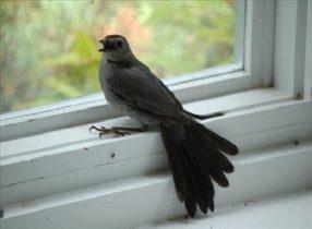 Chim bay vào nhà là điềm báo gì? những con số liên quan