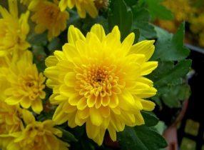 Những loại hoa nên cắm trên bàn thờ để gia đình hưng vượng