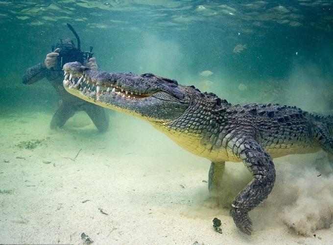 Mơ thấy cá sấu có ý nghĩa gì