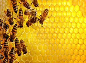 Mơ thấy ong là điềm báo gì ? Những con số liên quan
