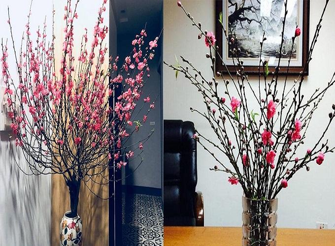 Cách giữ hoa đào tươi lâu trong ngày Tết