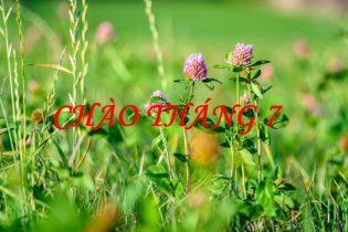 Tử vi tháng 7/2020 của 12 cung hoàng đạo, Bạch Dương nhiều may mắn